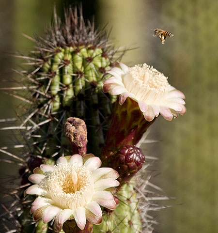 Nature Photography Workshop - Cactus Flower
